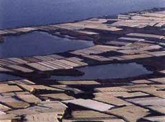 """COAG alerta de la """"desaparición progresiva"""" de la superficie de invernaderos del litoral granadino"""