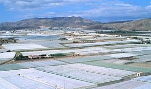 UPA denuncia el enriquecimiento de los distribuidores de frutas y hortalizas a costa de los agricultores